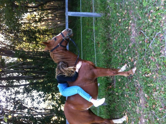 Hyksos Katana Colonial Arab endurance horse