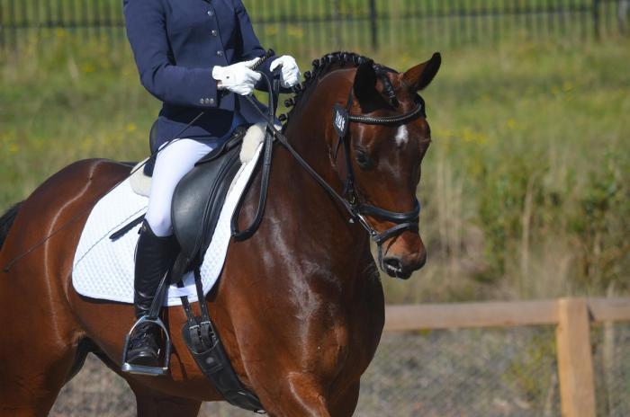 Stunning Imported Dressage mare StPrSt Weltferne