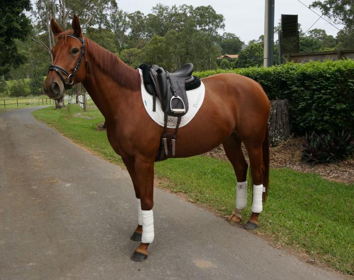 Beautiful Young Horse