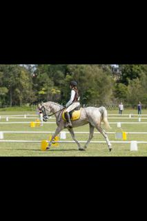 Super Competitive Young Rider Horse
