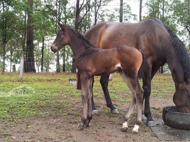 Lets Devine and filly foal