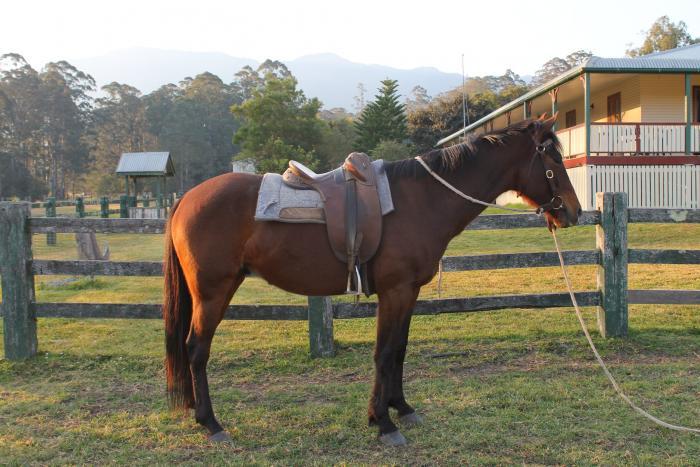 Stock horse x