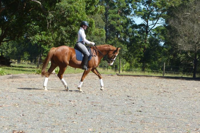 how to make a horse quit bucking