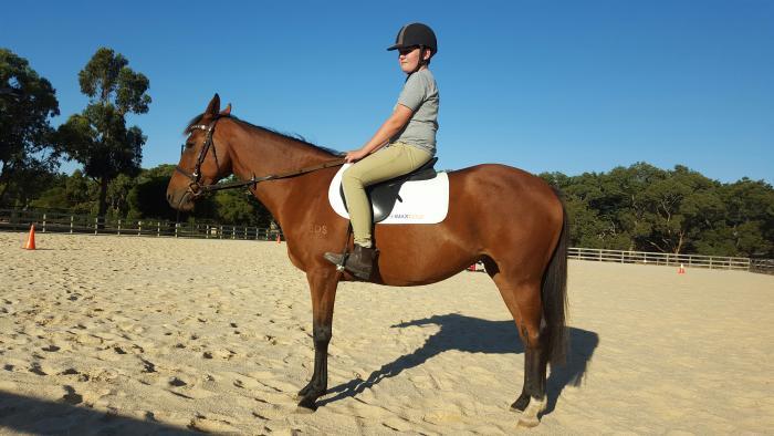 Registered Australian Stockhorse Mare