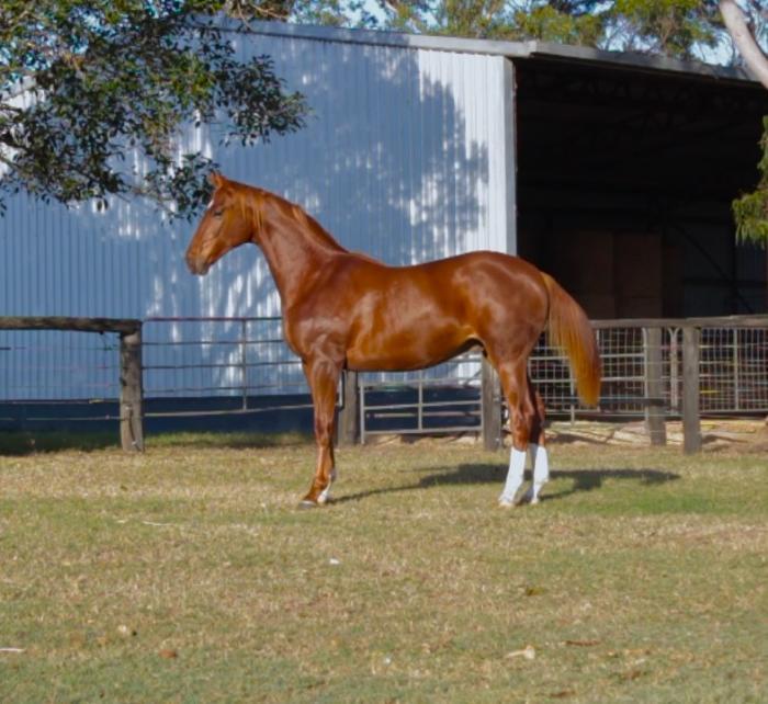 Exceptional Floreno colt for sale