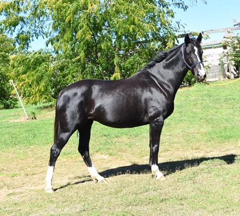 Beautiful black Fiji/Regardez Moi mare