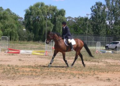 Trot at showjumping