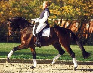 Ruiz Soler - ACE Group Stallion Service Auction