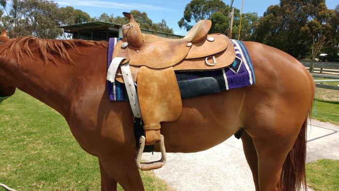"""Cayusa 16"""" Saddle"""