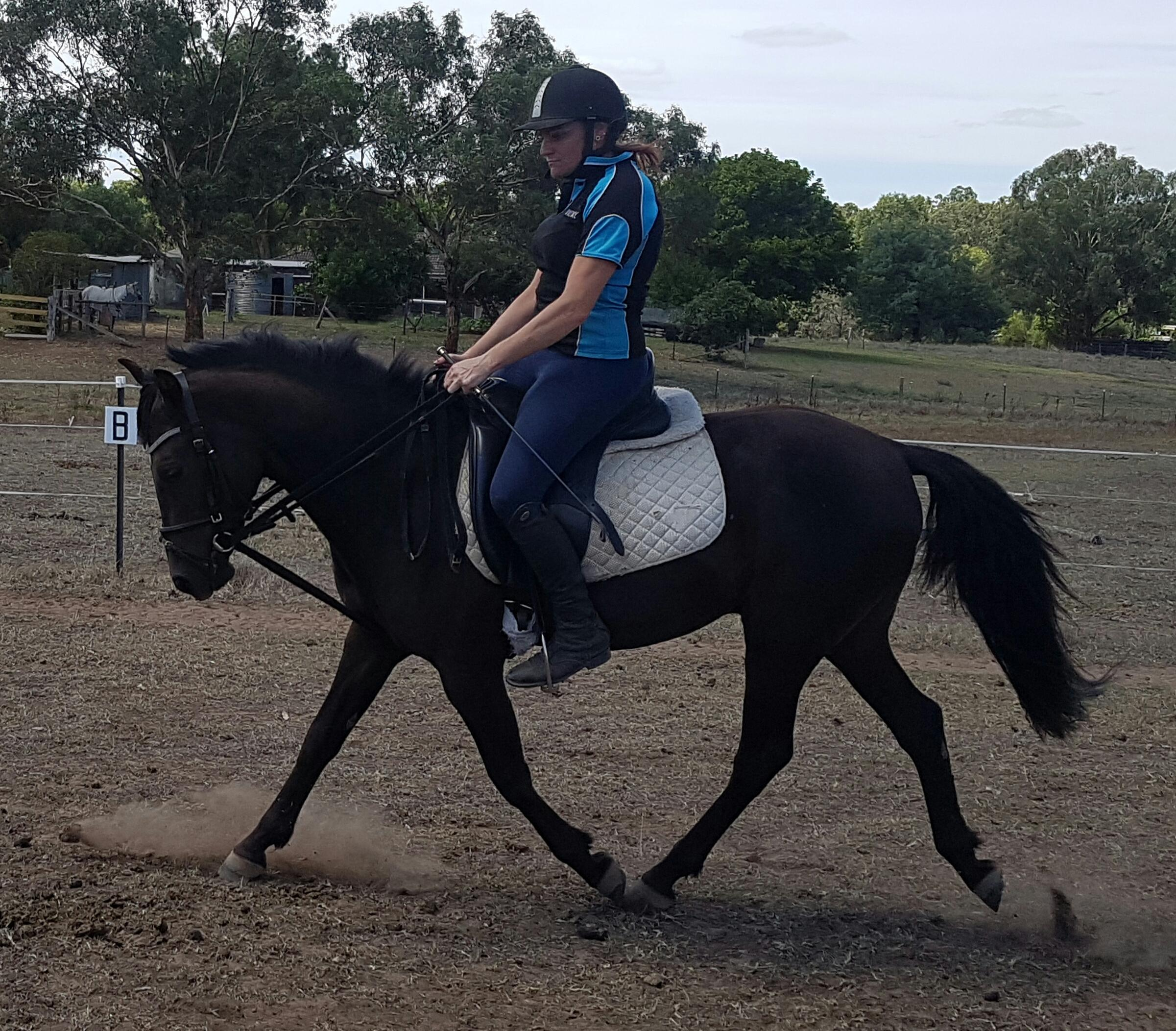 Stunning Black Potential Pony Reduced