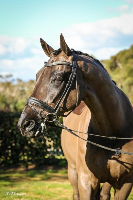Serious FEI Prospect - Price Reduced
