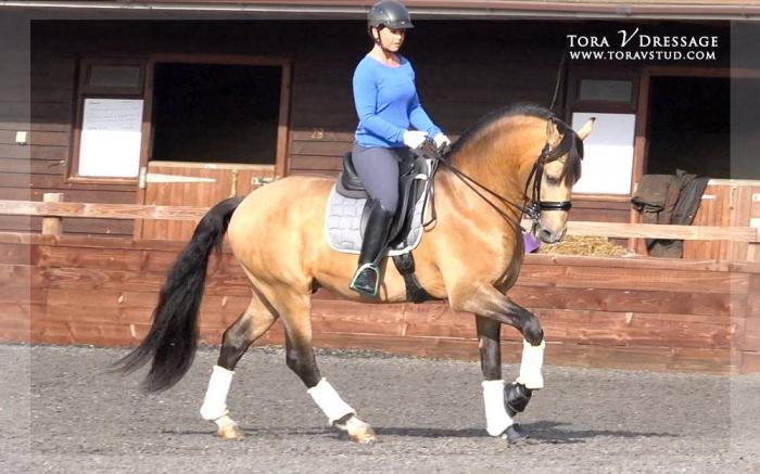 Lusitano - Imported - Movement - Temperament