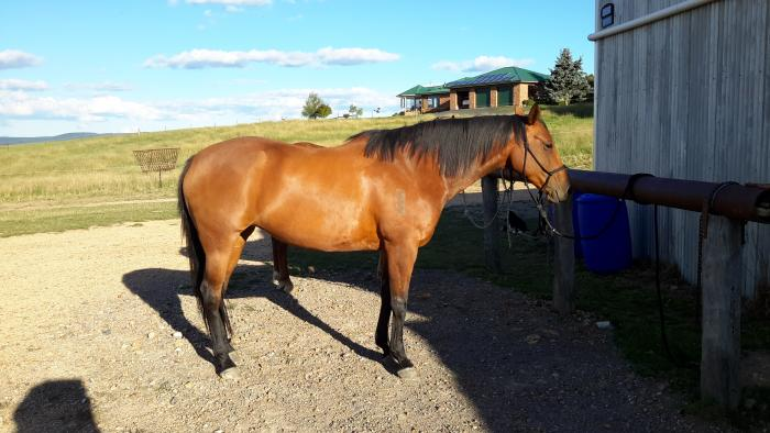 6 week trial on stunning ASH mare