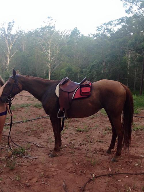 Ruby - Quiet Stock Horse Mare