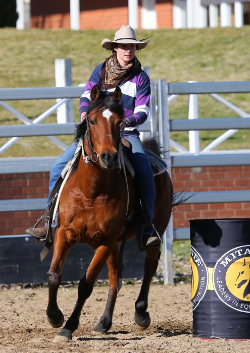 Price Reduced!! Gorgeous All Rounder Arab Gelding
