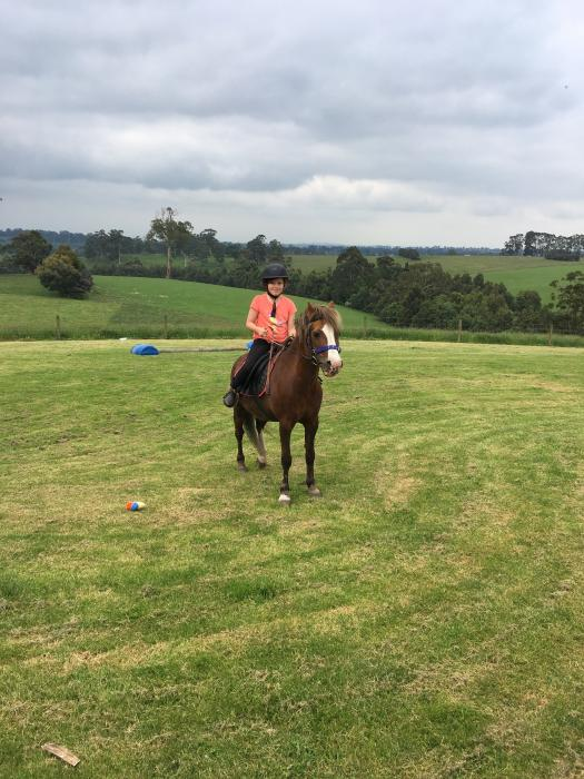 Welsh pony 12.2h for confident beginner upwards
