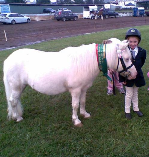 Awesome lead line pony Reg Shetland