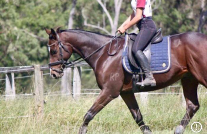 Stunning Thoroughbred Gelding PRICE REDUCED!!