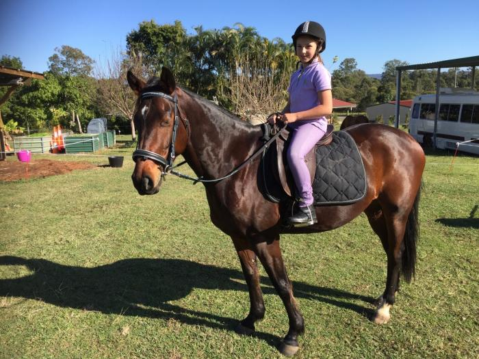 QUIET AND STEADY ALL-ROUNDER GELDING QUARTER/STOCK
