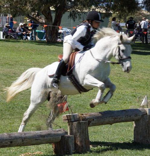 Dream Beginner Pony