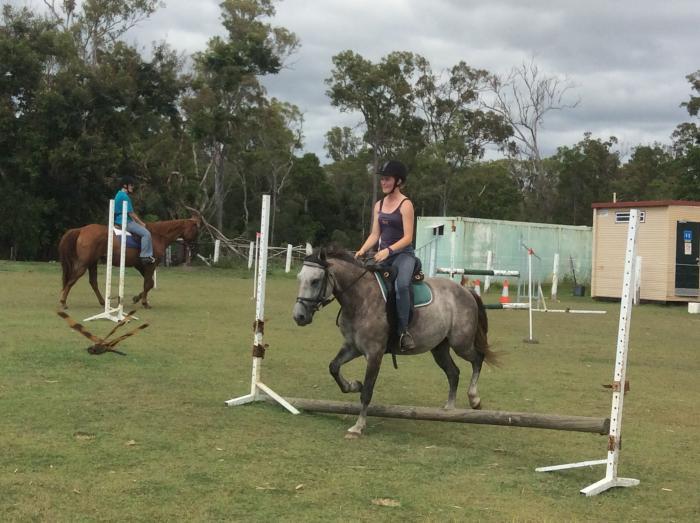 very quick on feet - Grey gelding 13.3hh