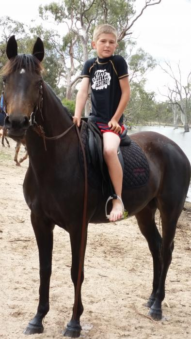 Black/Brown Arab Mare