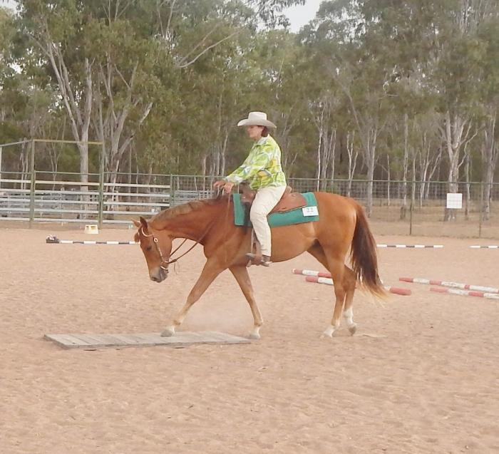 Quiet 3 Y O Registered Gelding.