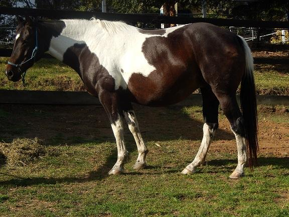 TOBIANO MARE BY SPOT OF GRAND