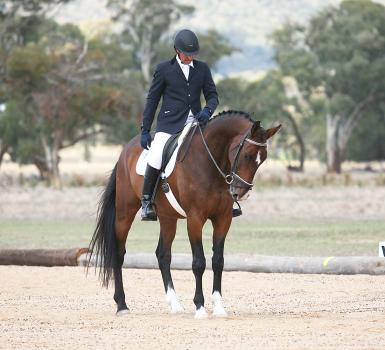 Andre - Young Dressage 2016
