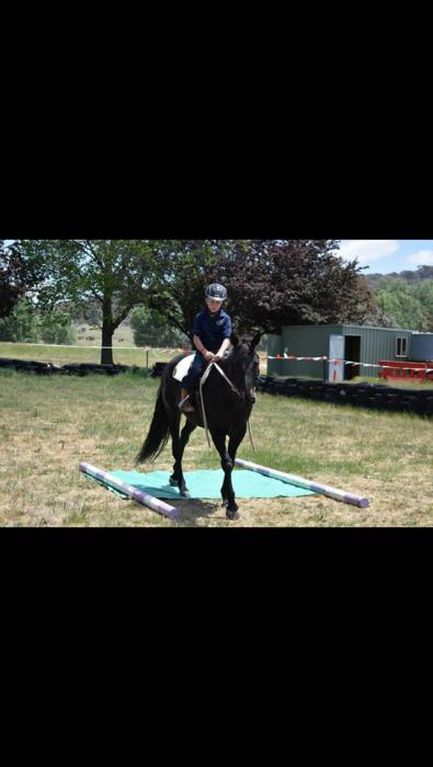 Stockhorse 14.2hh Black Mare 11 yrs