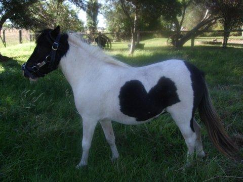 My name is 'Skye' with a black Love Heart