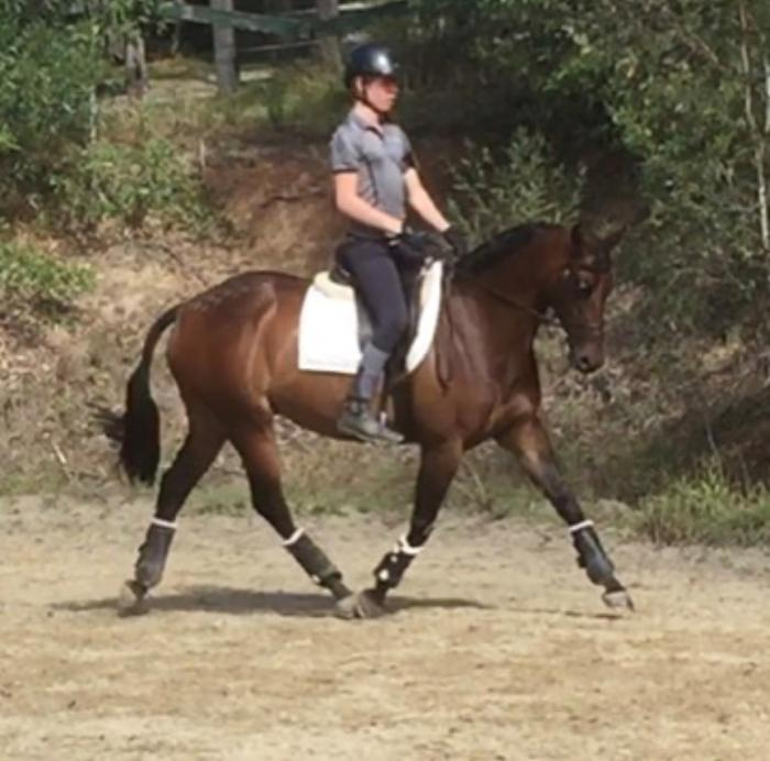 MUST SELL - PONY DRESSAGE OR SHOWING   !!!!