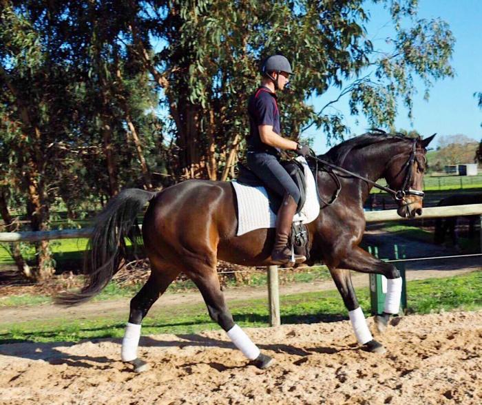 Powerful Scopey Mare