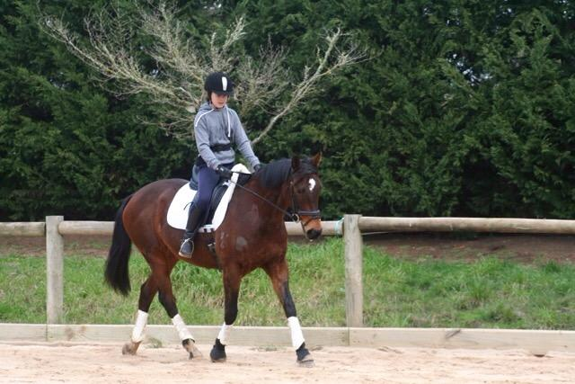 Talented thoroughbred mare