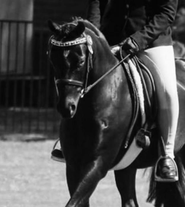 Stunning Black Pony