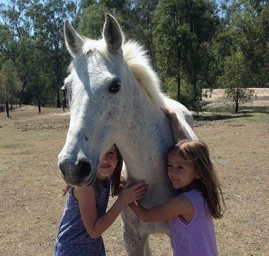 13hh flea bitten grey Mare for sale