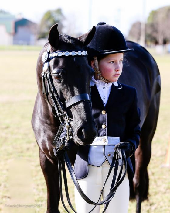 TOP LARGE SHOW PONY