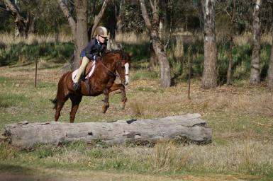 Millie Jumping at Hunt
