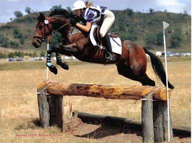 Scone Horse Trials. PC: Main Event Photography