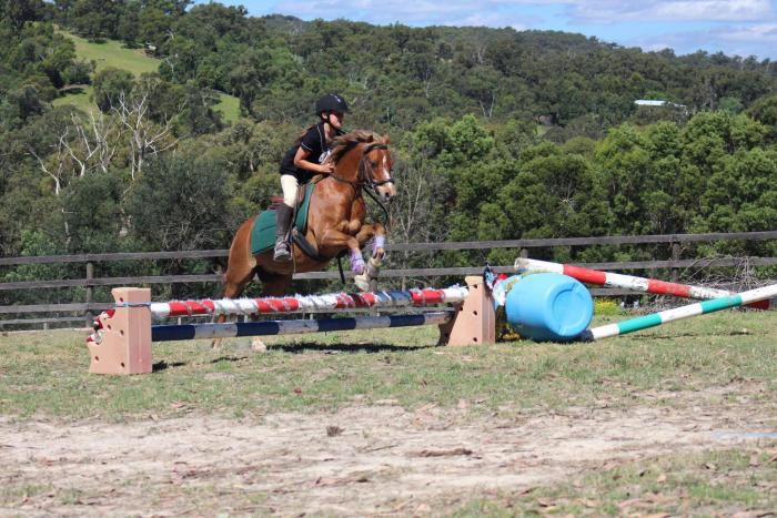 Perfect ponyclub pony