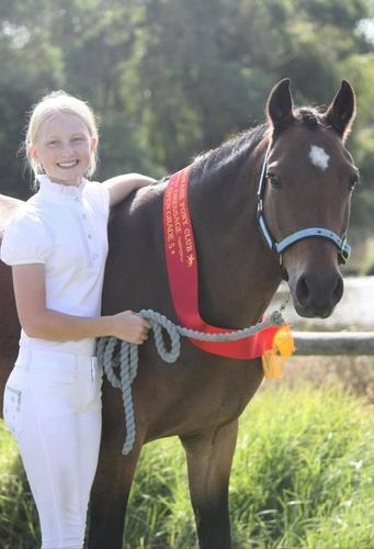 Stunning Dressage Pony