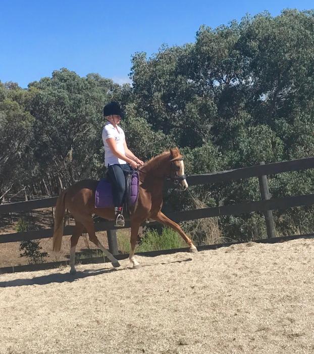 Registered 13.1 Riding Pony