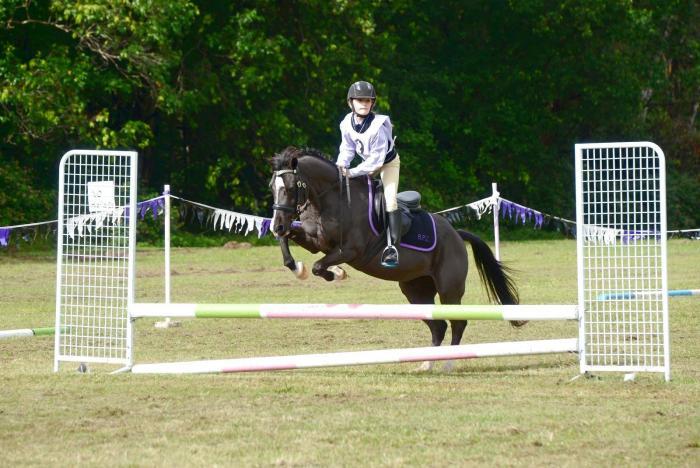 Champion pony for sale
