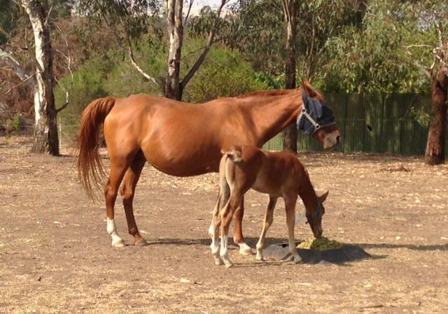 Lovely Brood Mare or companion horse