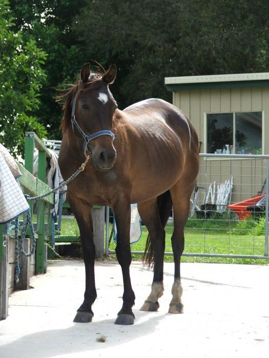 Very handsome standardbred gelding