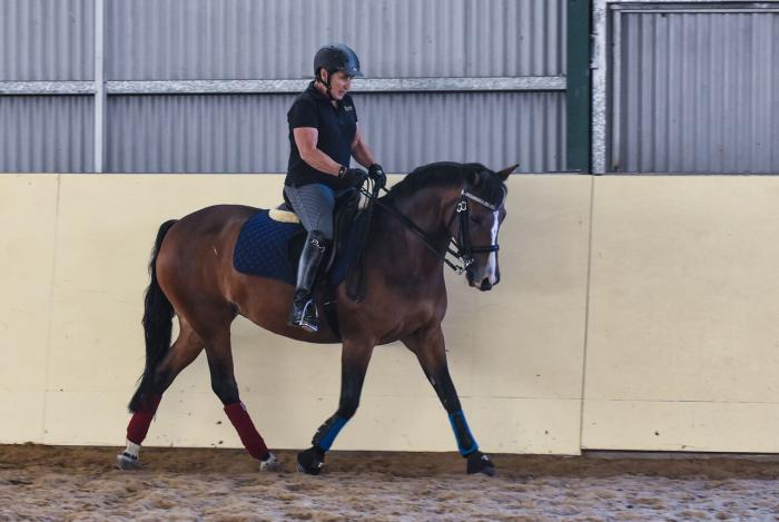 New Forest School Master Dressage Pony
