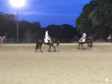 Fig Tree Pocket Dressage Warm-up