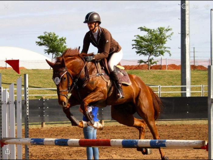 Promising Young Showjumper/ Eventer