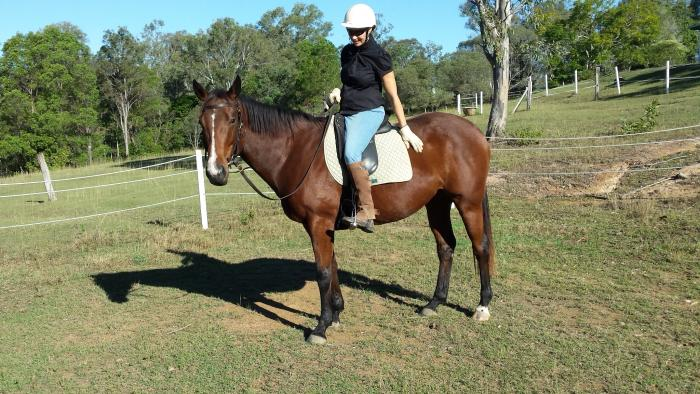 THOROUGHBRED MARE IDEAL PROJECT