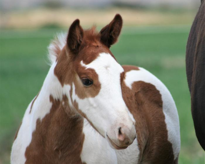 Coloured Colt (Melane LilLessConvasation)